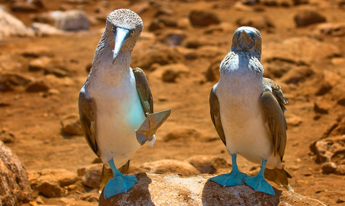 Equador - Ilhas Galápagos