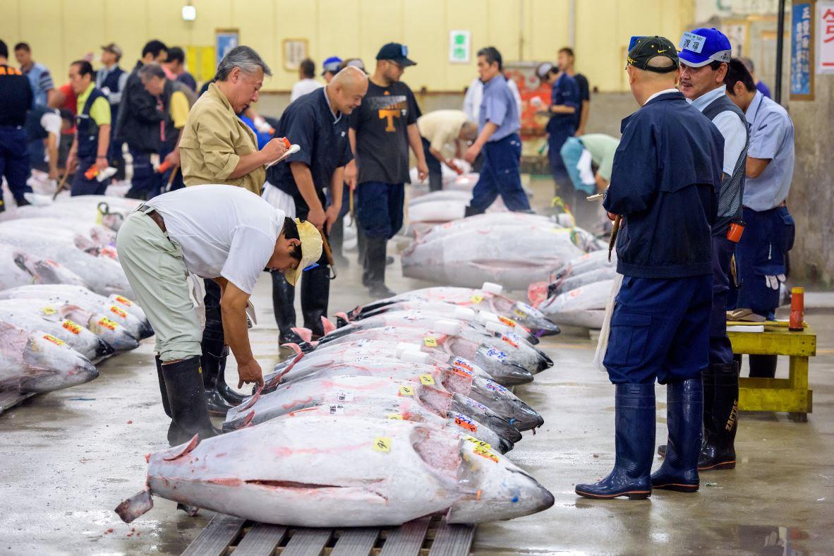 Os leilões no Tsukiji são uma atração a mais à parte - Foto Sean Pavone/Shutterstock.com