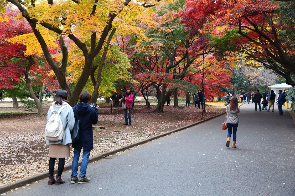Outono no Jardim Nacional Shinjuku Gyoen - Foto: Tupungato/Shutterstock.com