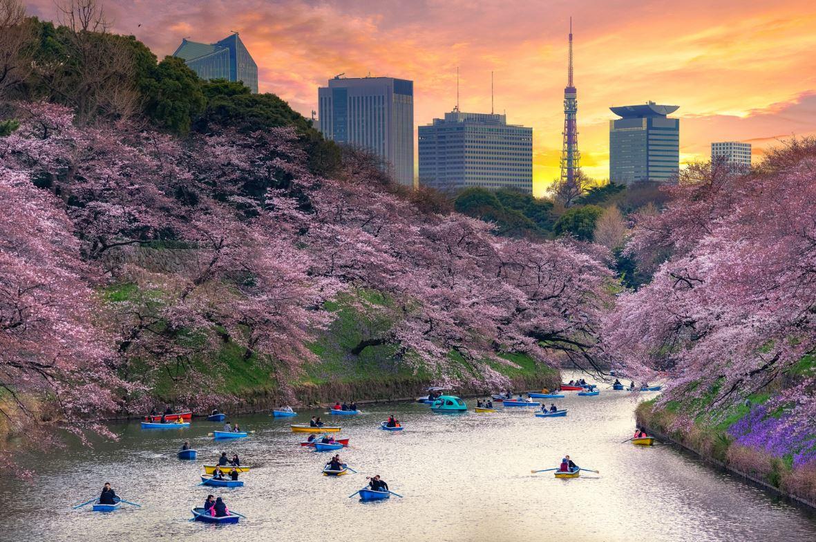 Cerejeiras em flor embelezam a capital japonesa