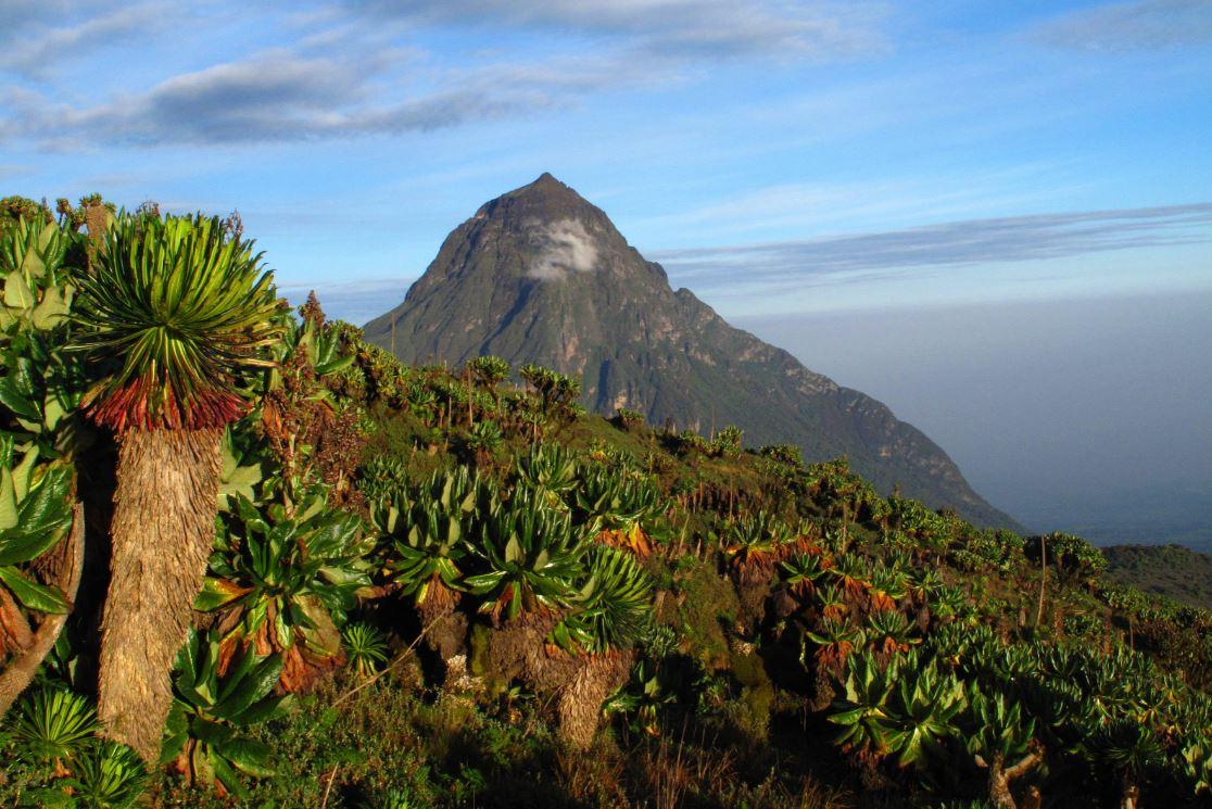 Parque Nacional dos Vulcões, em Ruanda