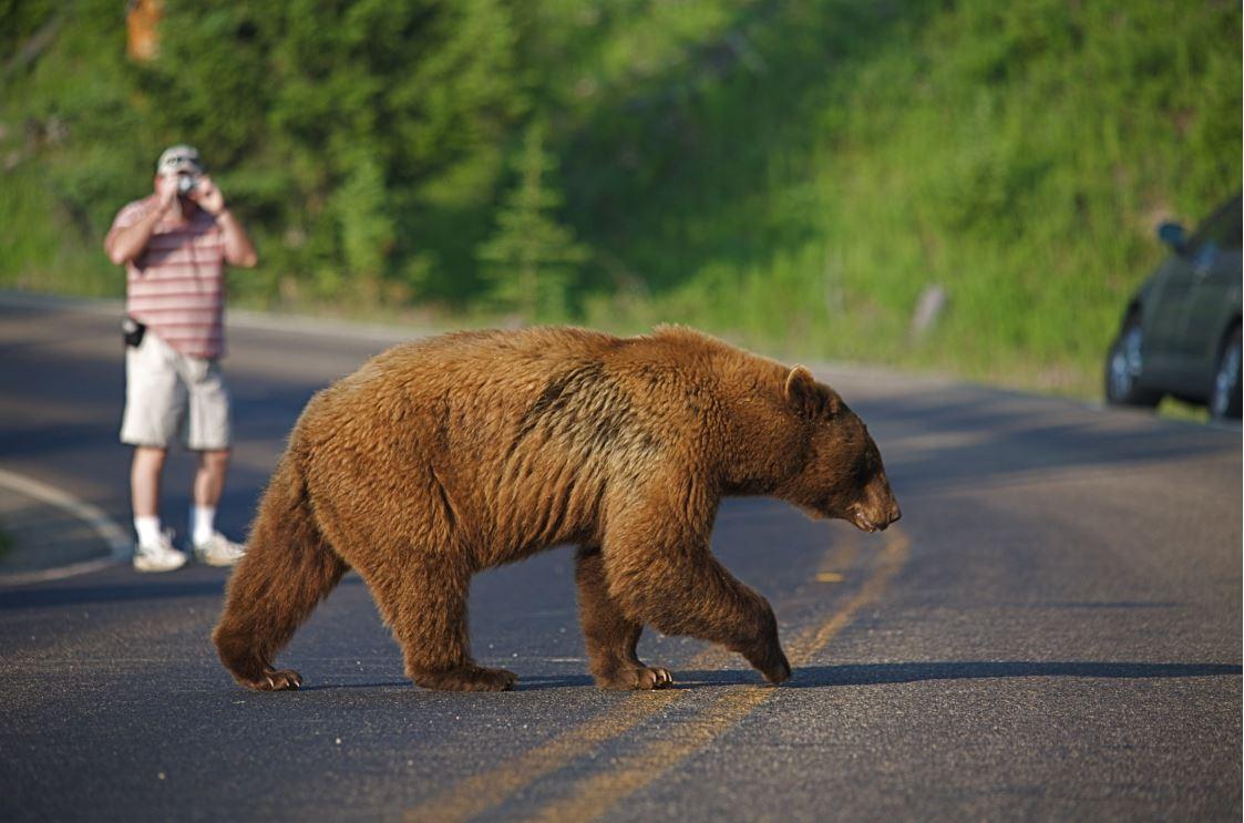 Yellowstone National Park: santuário da vida selvagem